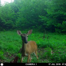 The Best Of The Back 40 And Paradise Farm Game Camera Captures!