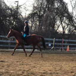Project Cool- Day 7- Trotted Under Saddle!