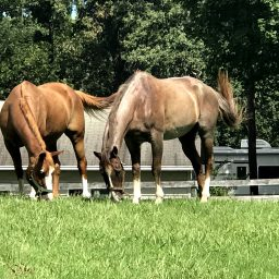 2 Week-End Days And 2 New Horses!