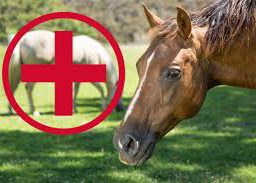 A Christmas Present For The Whole Barn- First Aid Kit For Horses